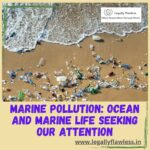 Marine Pollution: Ocean and Marine life seeking our attention
